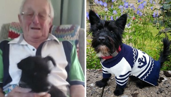 Surprise Puppy Has Amazing Effect on Grandpa Suffering from Dementia [Video]