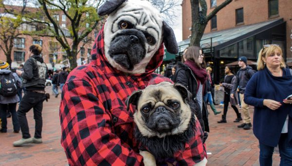 11 Dogs Showing Off Their Howl-oween Pet Parade Costumes