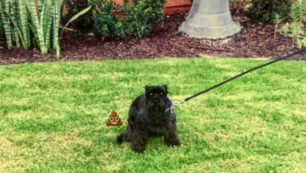 How to Teach Your Dog to Poop on Leash