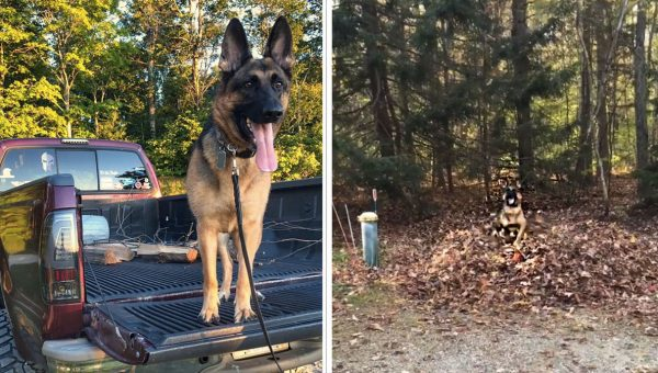 German Shepherd Here to Make You Happy in Perfect Little Fall Video