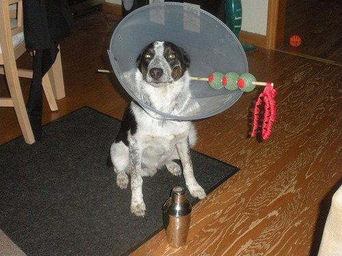 A dog wears a martini large dog costume made of a cone and stick.