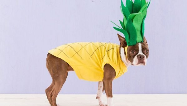 10 Perfectly Irresistible DIY Dog Costumes You Can Whip Up at Home