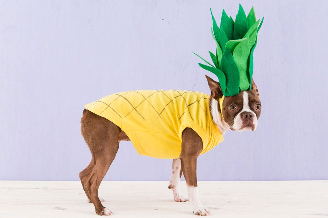 Pineapple DIY & 10 Perfectly Irresistible DIY Dog Costumes You Can Whip Up at Home ...