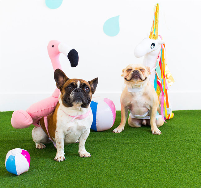 Two dogs model pool float DIY dog costumes