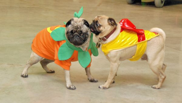 The Best Dog Halloween Costumes by Dog Breed