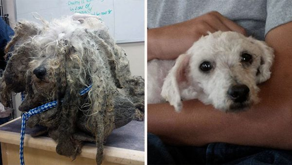 'Dirty Dogs Gallery' Shows Incredible Rescue Dog Makeovers to Raise Awareness for Shelter Pets