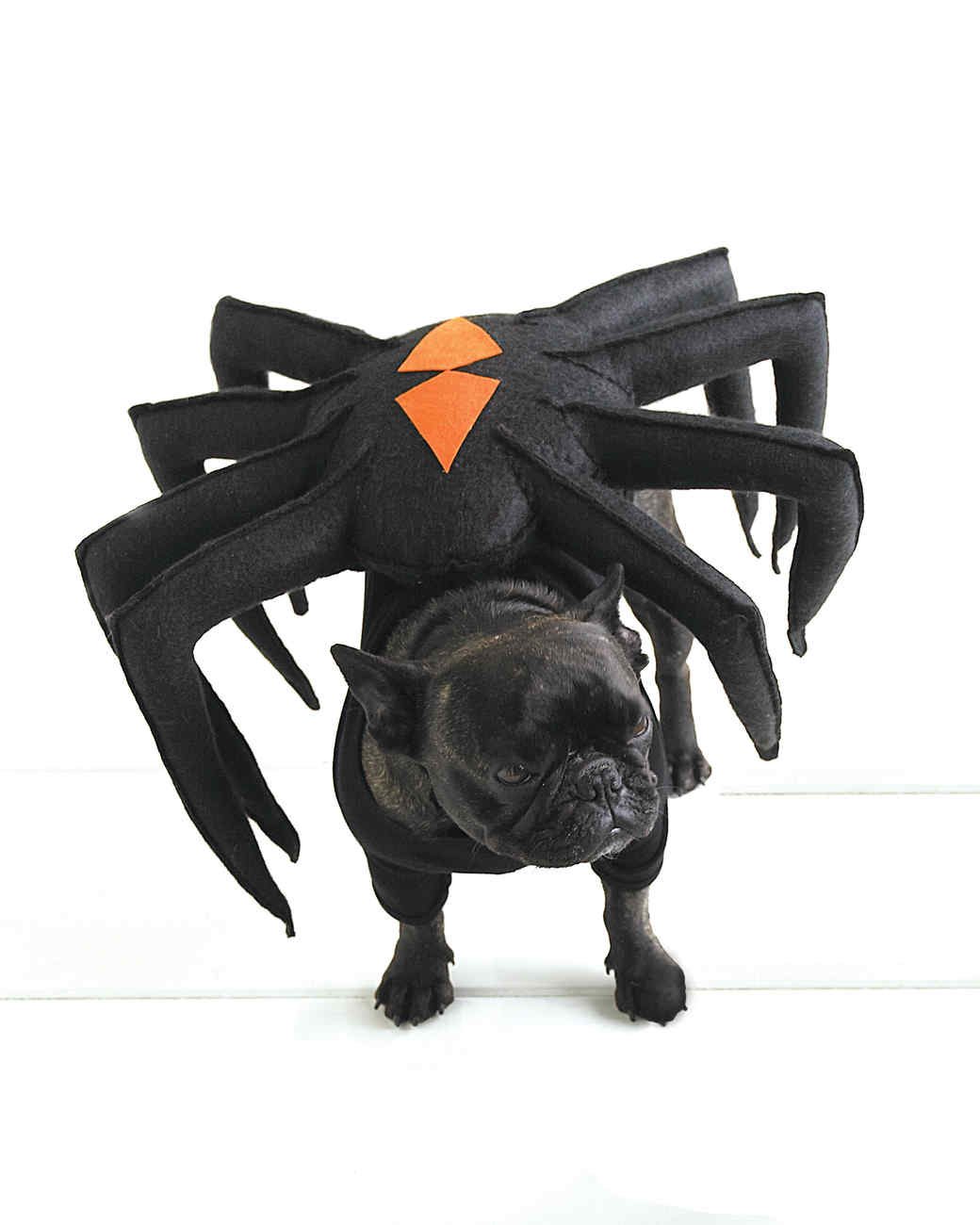 This spider costume can be your dog's large dog costume.