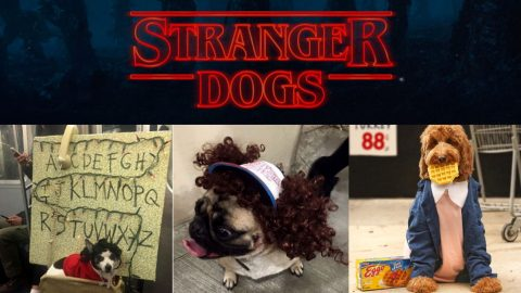 """costumed dog with """"Stranger Dogs"""" title above"""