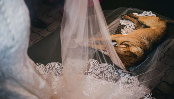 Stray Dog Crashes Wedding and Ends Up Adopted by the Couple