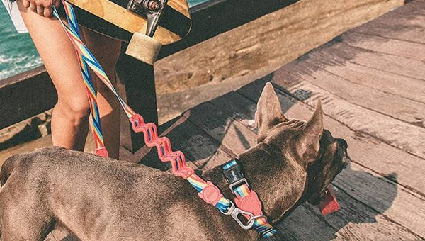 Designer Poop Bags and Other Hip Accessories Will Rock Your Dog Walks