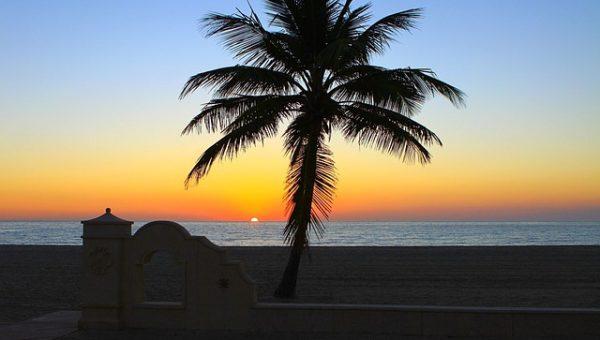 Top Dog Beach in Hollywood, FL