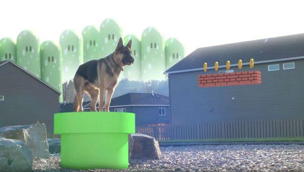 Adorable German Shepherd Plays Real Life Super Mario Bros [Video]