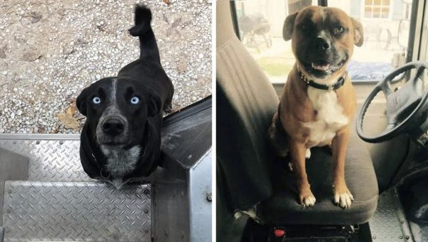 UPS Drivers Created a Facebook Page for Dogs They Meet and It's Amazing
