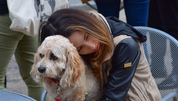 Therapy Dogs: All About Canine Companions for Survivors of Abuse