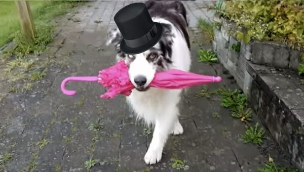Dog's Amazing Dance Moves with Umbrella Inspire Cute Video Remix