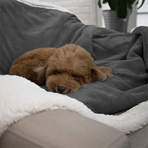 How To Prepare Your Dog Emotionally Before You Travel Without Them The Dog People By Rover Com