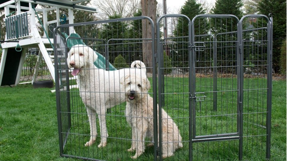 Backyard Dogs the best portable dog runs to keep dogs safe in every backyard | the