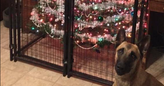 10 Genius Pet Parents Who Figured Out How to Save the Christmas Tree