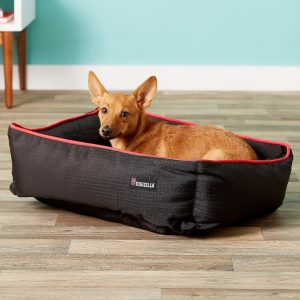 small dog in Dogzilla bolster dog bed