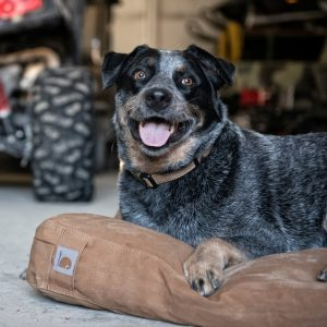 Carhartt indestructible dog bed