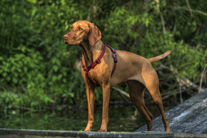 We Review The Best 8 Dog Harnesses For Every Kind Of Dog The Dog