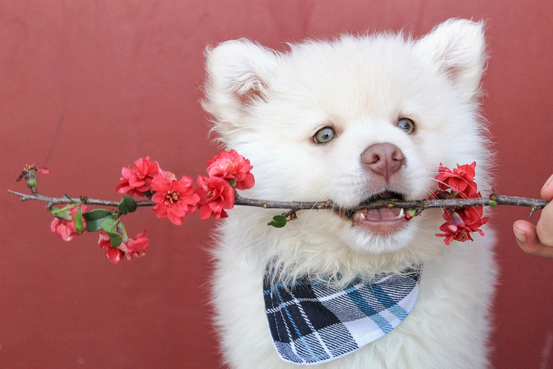 House Plants Poisonous To Dogs And Safe Alternatives For Your Home