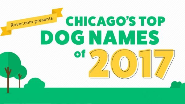 Chicago's Top Dog Names of 2017