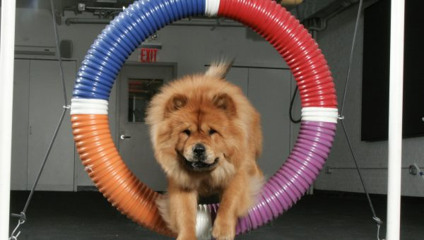 Dog Exercise Equipment: How it Works and When to Use It