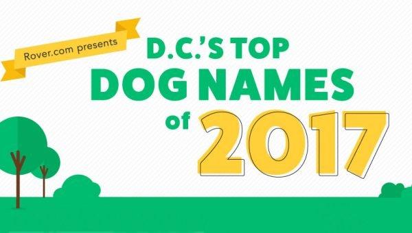 Washington DC's Top Dog Names of 2017
