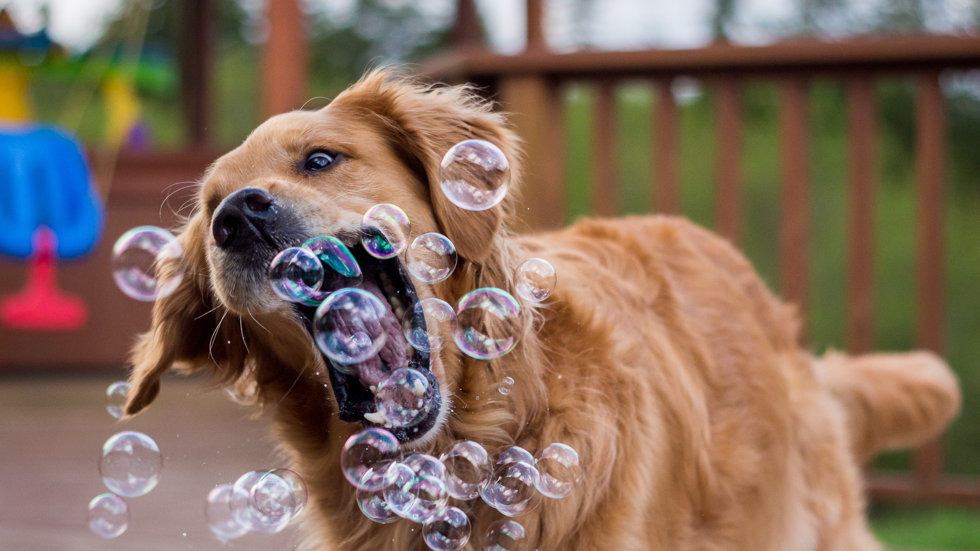 21 Simple Tricks To Make Your Dog Happier Smarter And