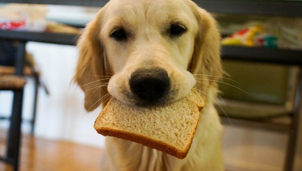 Here's Why Raw Bread Dough Is so Dangerous for Dogs