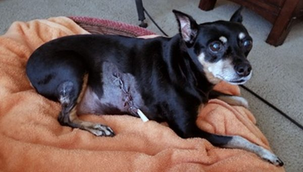Lucky Dog Survives Bear Attack Thanks to a Little Extra Padding