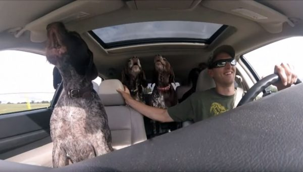 These Dogs Just Realized They're Going to the Park and Their Reaction is Infectious [Video]