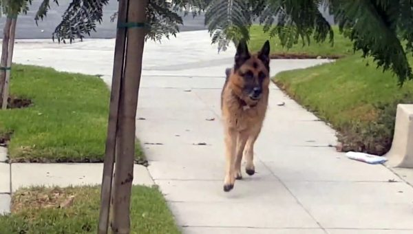 This Dog Just Isn't Going to Tolerate His Dad Playing Hide-and-Seek [Video]