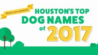 Unique Dog Names | 132 Most Unusual Dog Names from National Data