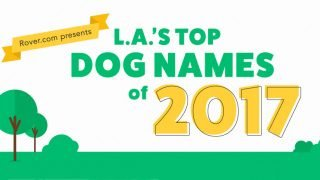 Top Dog Names | Top 100 Male and Female Dog Names