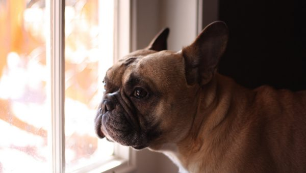 9 Signs Your Dog Misses You While You're Gone