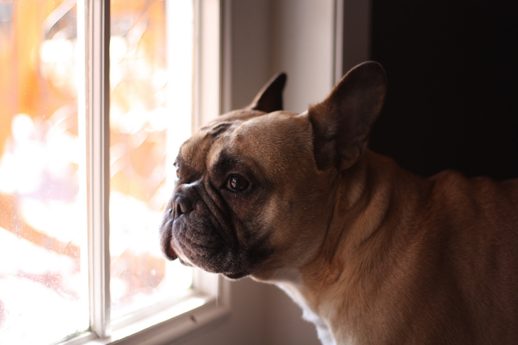 9 Signs Your Dog Misses You While Youre Gone The Dog People By