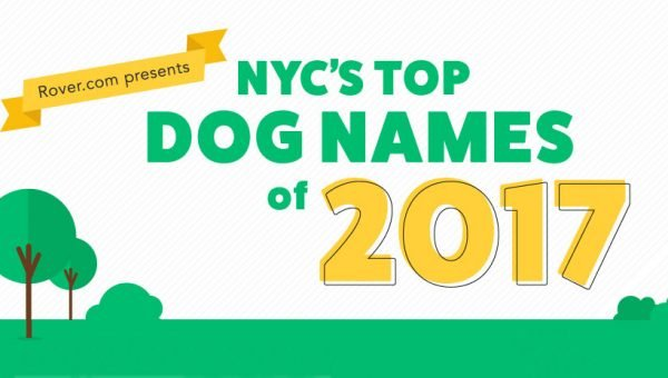 The Best Japanese Dog Names for 2018 with Meanings and