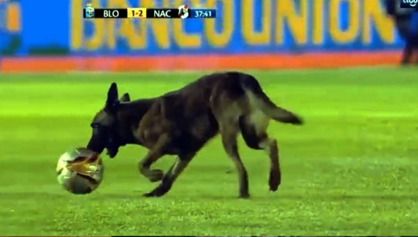 Police Dog Steals the Ball and the Show at Live Televised Soccer Match [Video]