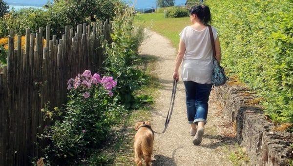 5 Belles balades près de Lyon à faire avec son chien