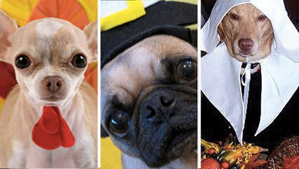 Pick Your Thanksgiving Faves and We'll Choose a Puppy for You to Nap with Afterwards
