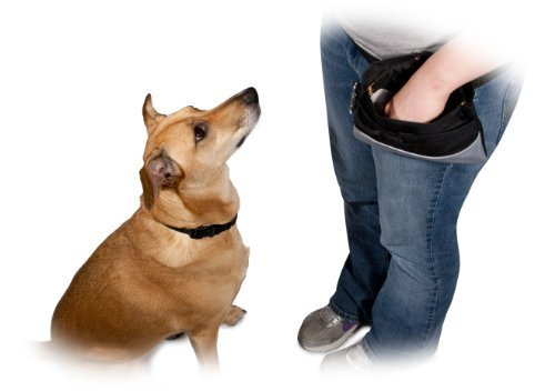 How To Train A Dog Not To Jump On You Or Others The Dog People By