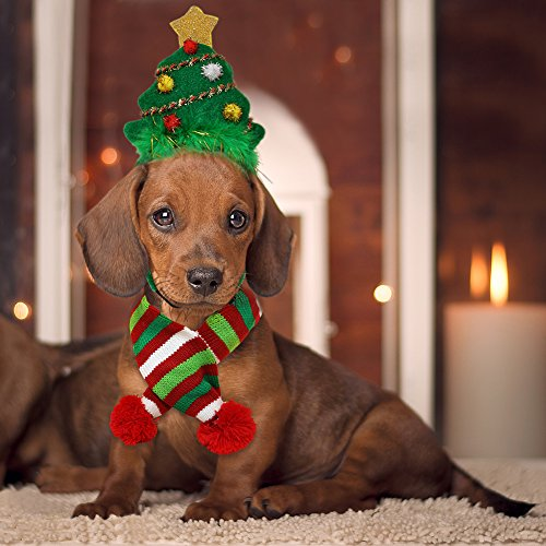 11 Best Christmas Dog Outfits to Get Your Dog in the Holiday Spirit ...