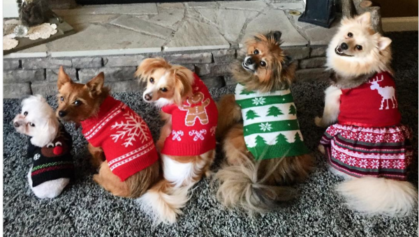 How to Dress Your Dog for the Holidays When They Hate Dressing Up