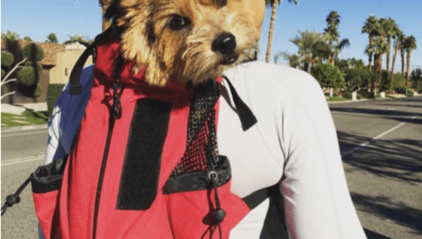 Our Favorite Gifts for Adventurous Dogs and Their Humans