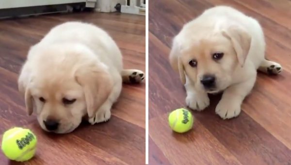 Could You Resist These Perfect Puppy Dog Eyes? [Video]
