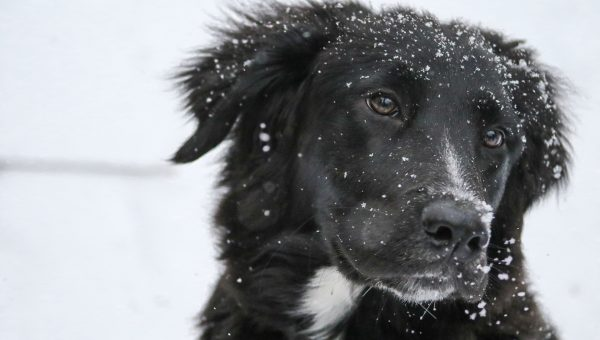 How to Winterize Your Dog for Health, Safety, and Fun