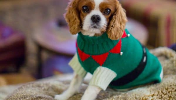 12 Best Christmas Dog Outfits to Get Your Dog in the Holiday Spirit