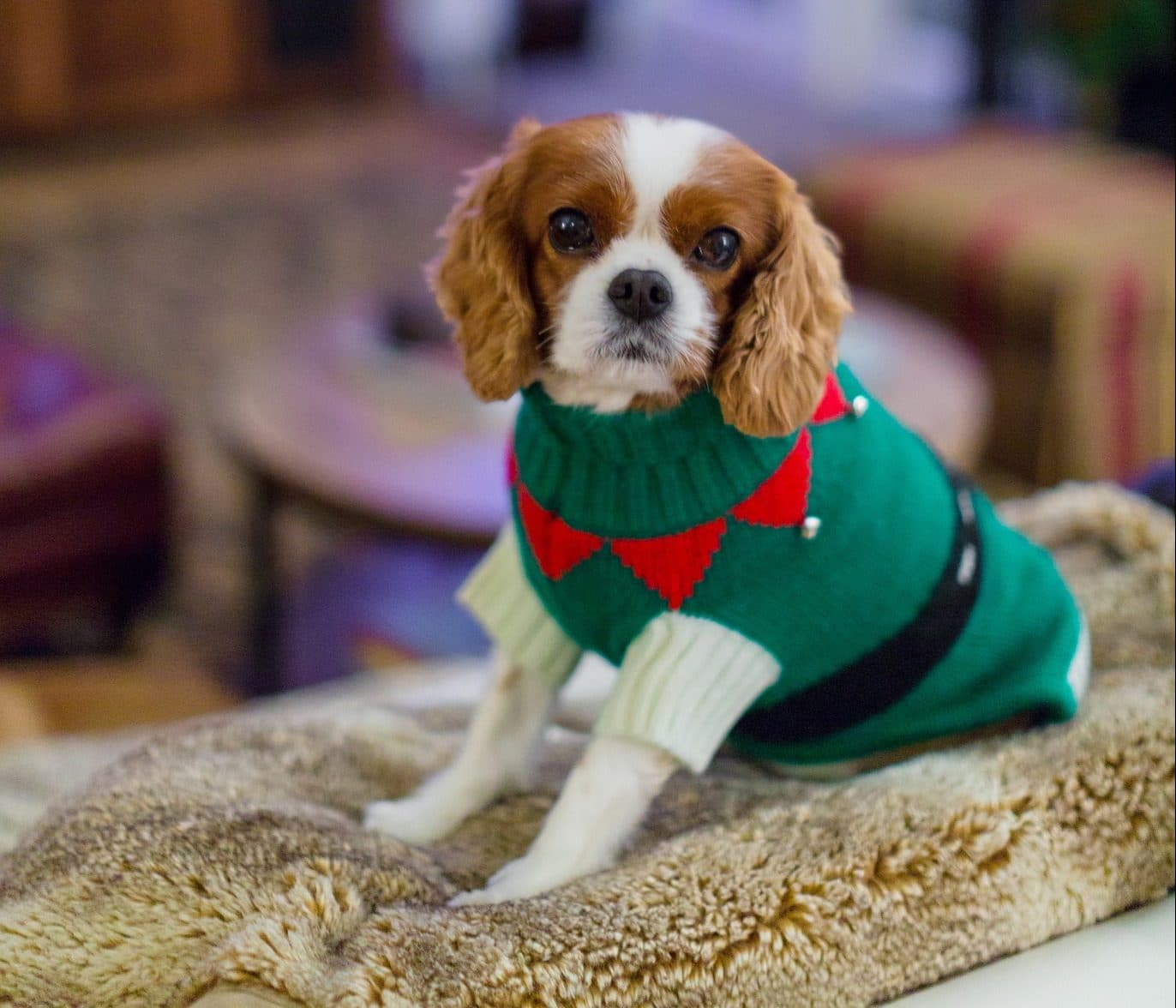 Holiday Dog Dress ~Christmas Lights ~Fancy Dog ~Puppy Dress ~Pet Apparel ~Dog Outfit ~Small Dog ~Cute Dog Clothes ~Christmas Dog Dress
